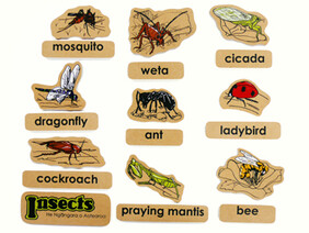 Insects Magnetics English